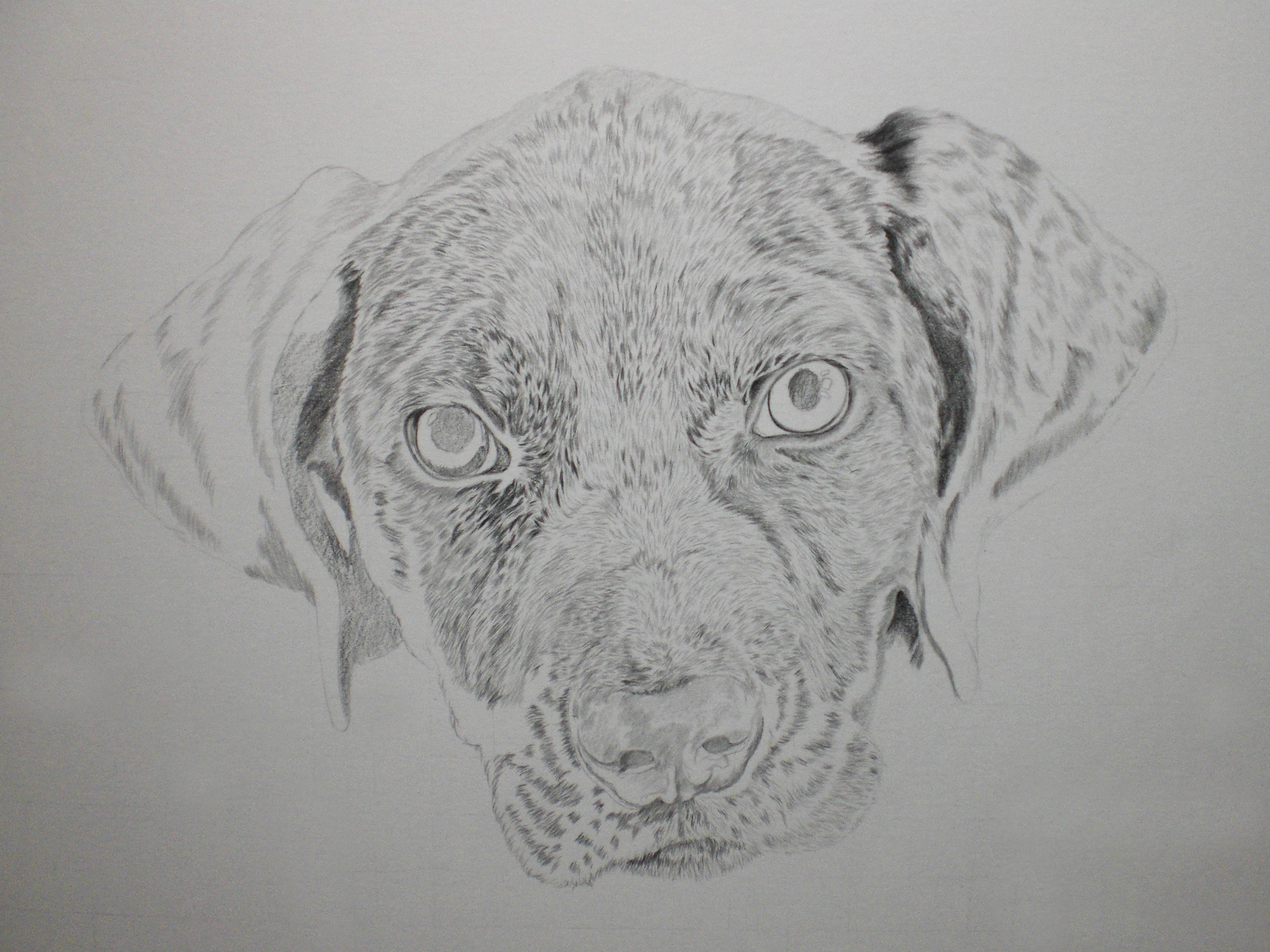Staffordshire Bull Terrier – WIP, 25-03-17
