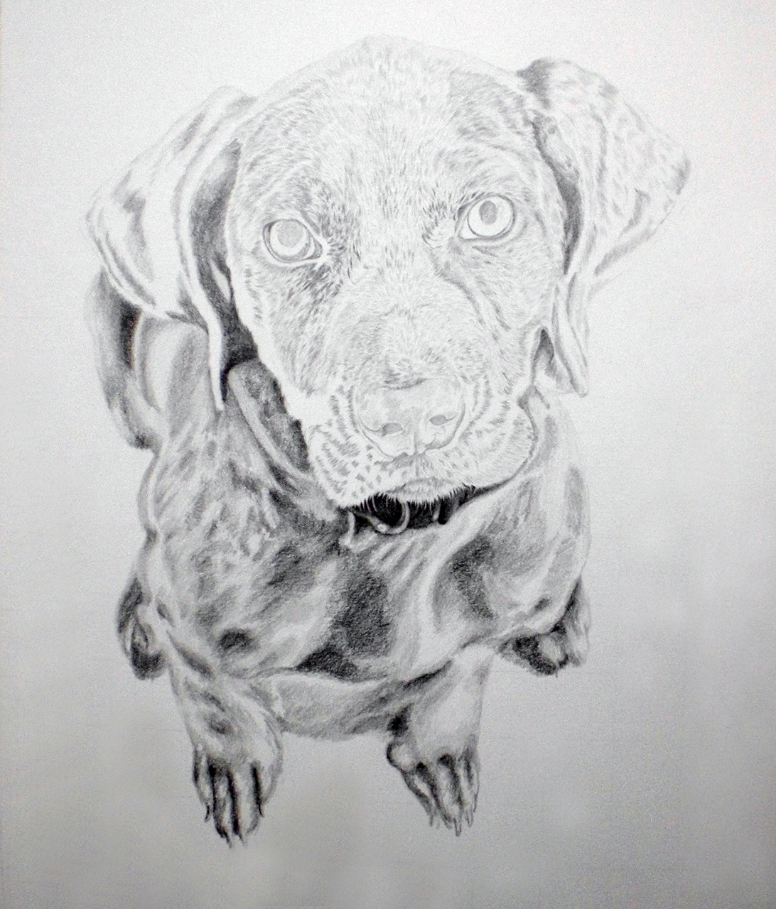 27-03-2017 – Staffordshire Bull Terrier WIP