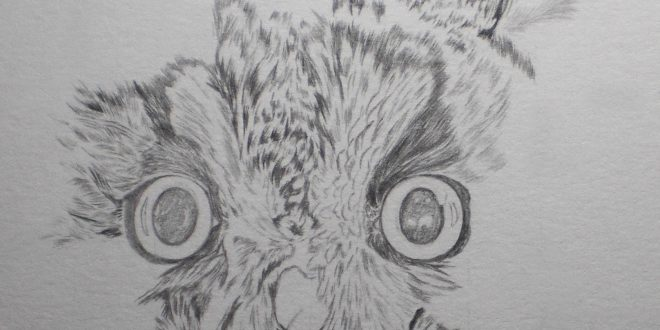 16-08-17 – Long Eared Owl WIP