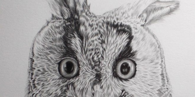 04-09-17 – Long Eared Owl WIP