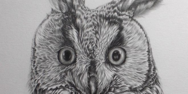 06-09-17 – Long Eared Owl WIP