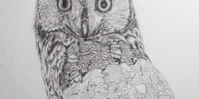 09-09-17 – Long Eared Owl WIP