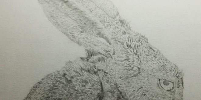 11-04-18 – Hare WIP