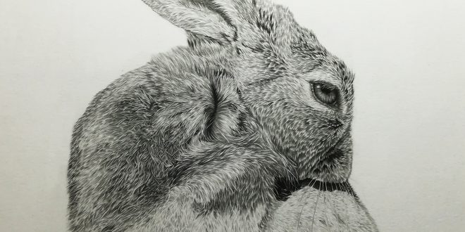 28-04-18 – Hare WIP