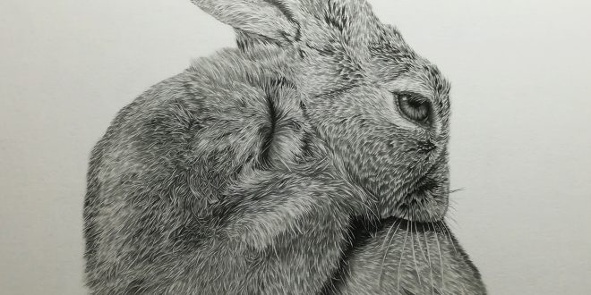 02-05-18 – Hare WIP