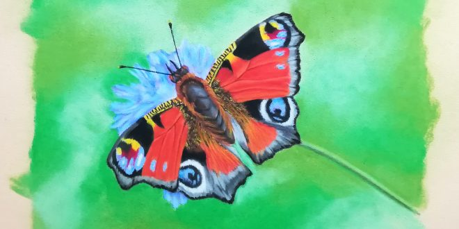 16-05-18 – Peacock Butterfly colour sketch
