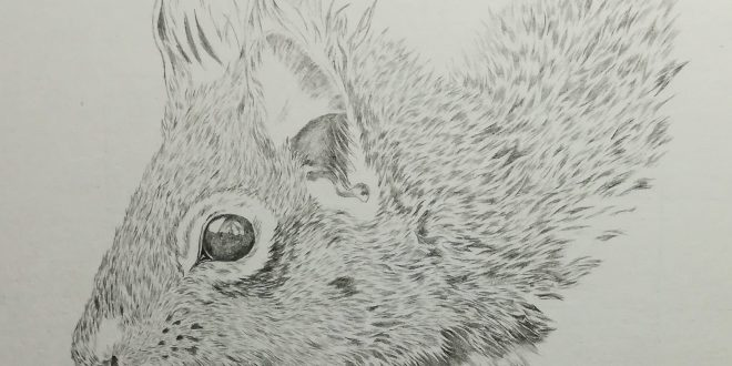20-06-18 – Red Squirrel WIP