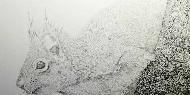 30-06-18 – Red Squirrel WIP
