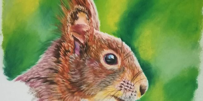06-06-18 – Red Squirrel colour sketch.
