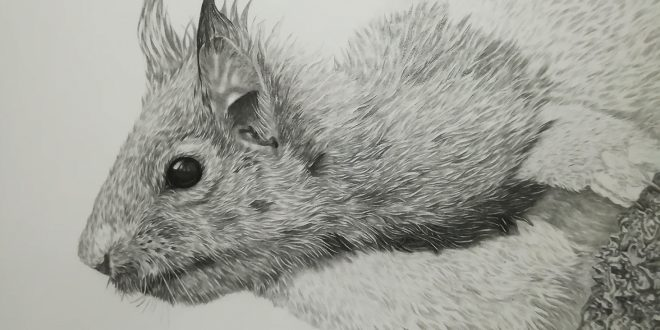 18-07-18 – Red Squirrel WIP
