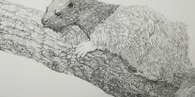 20-09-18 – Otter WIP