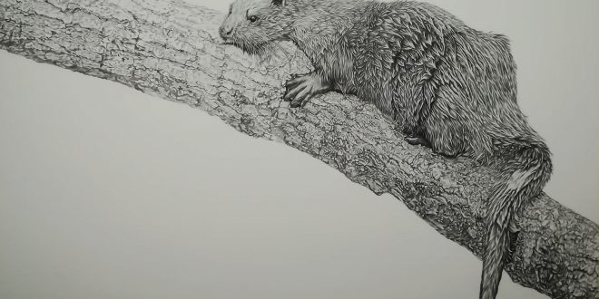 01-10-18 – Otter WIP