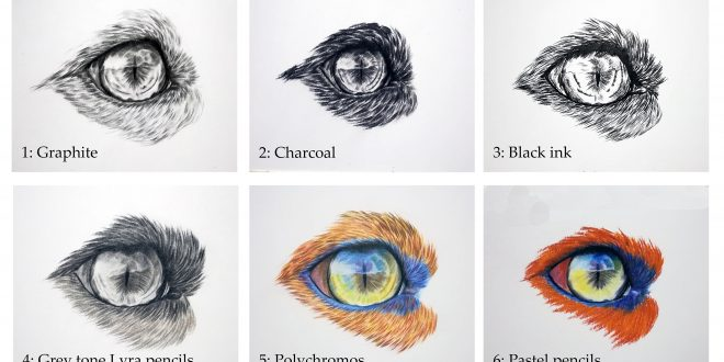 Fox Eye study, various media.