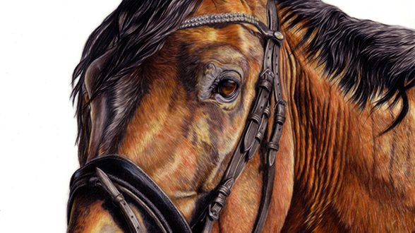 """Aurelian"", Horse Portrait in coloured pencil on drawing film."