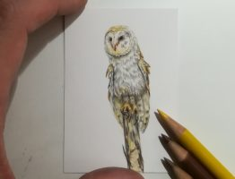 Barn Owl study, coloured pencil on Strathmore Smooth.