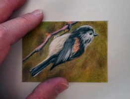 Long Tailed Tit study, coloured pencil on Strathmore velum, 3.5″ x 2.5″