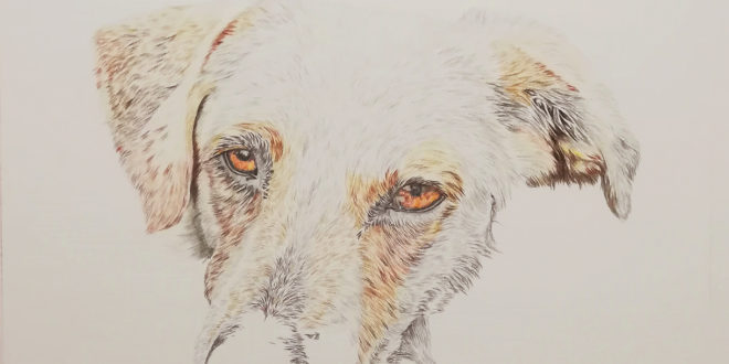 21-04-20 – Dog portrait WIP