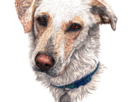 """Rogal"", dog portrait in coloured pencil on paper, by Martyn Fox"