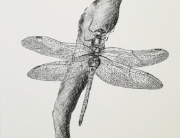 Dragonfly ink sketch on paper