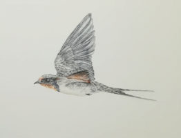 25-06-20 – Swallow WIP