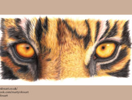 Tiger Eyes colour sketch