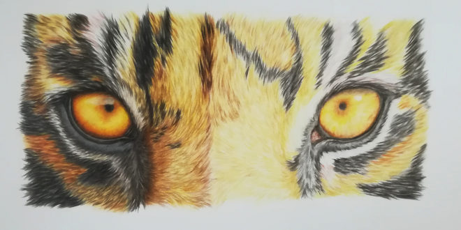 04-09-20 – Tiger Eyes sketch