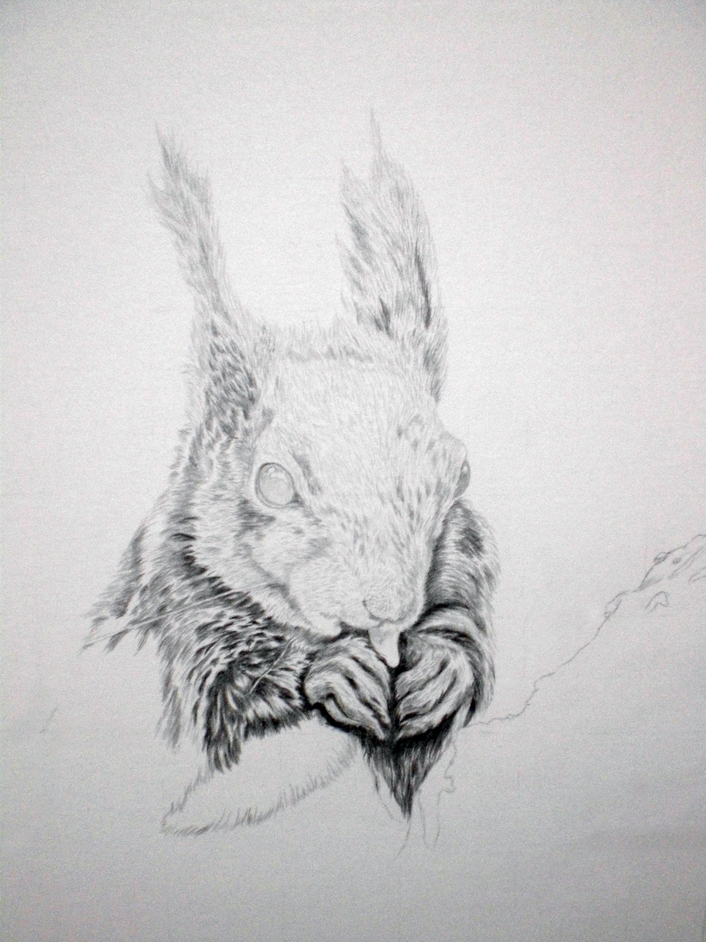 07-03-17 Red Squirrel WIP