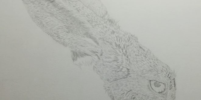 05-04-18 – Hare WIP