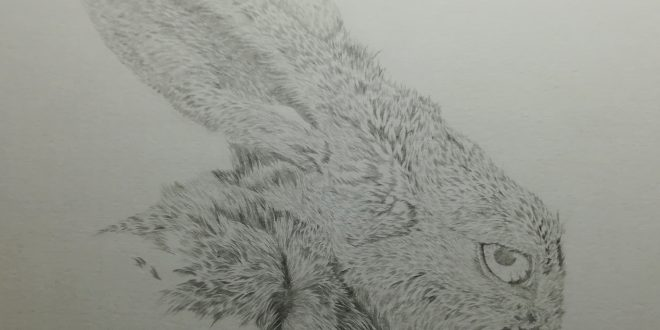 09-04-18 – Hare WIP