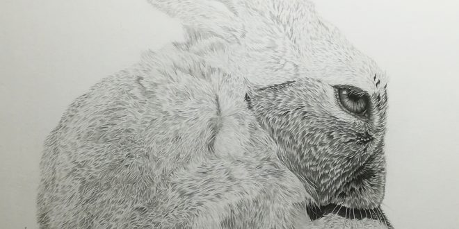 20-04-18 – Hare WIP