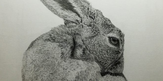 25-04-18 – Hare WIP