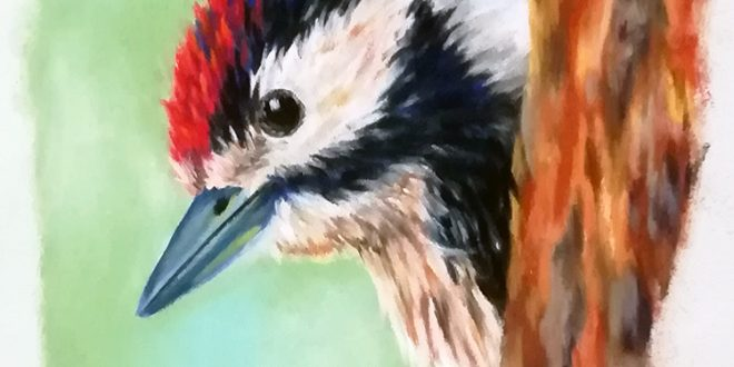 16-06-18 – Lesser Spotted Woodpecker colour sketch