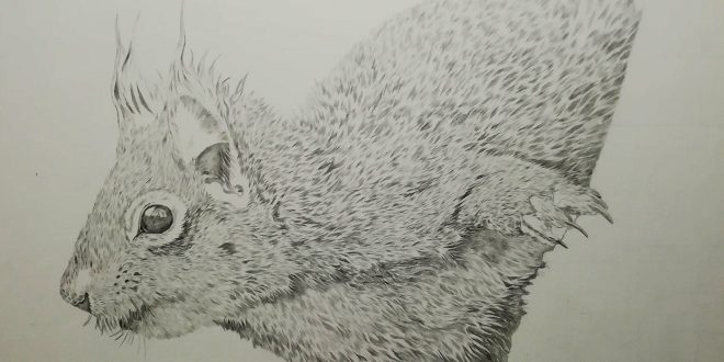 23-06-18 – Red Squirrel WIP