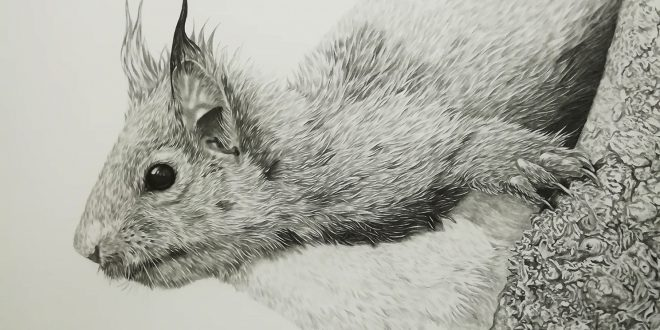 21-07-18 – Red Squirrel WIP