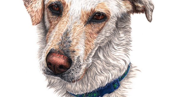 """""""Rogal"""", dog portrait in coloured pencil on paper, by Martyn Fox"""