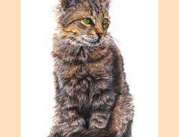 """""""Nutmeg"""", coloured pencils on A4 Strathmore paper"""